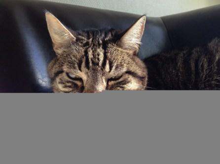 Lundi : mon chat