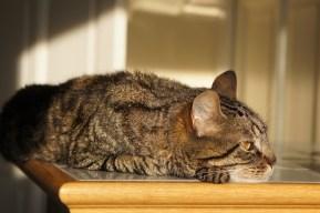 Samedi 13 juillet : La sieste au soleil de Diki