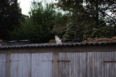 Mercredi 24 juillet : j'ai croisé ce chat dans une balade photo