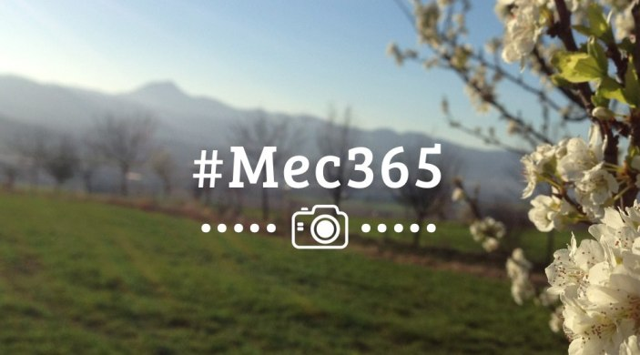 mec365-semaines-11-16