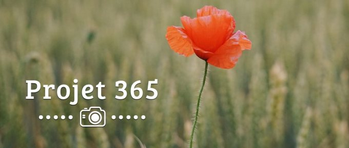 Les photos de mon Projet 365 #21 #22 #23 #24