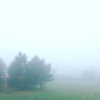2015-10-19-brouillard-arbres