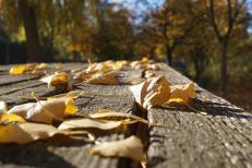 2015-10-31-automne3