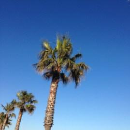Palmiers = vacances