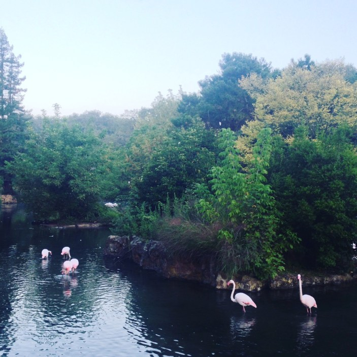 2016-09-20-flamants-parc-tete-dor-lyon