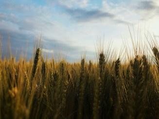 Seul à travers les champs