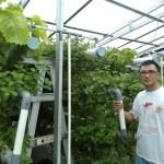 Melirik Indahnya Kebun Daun Mint di Pekanbaru