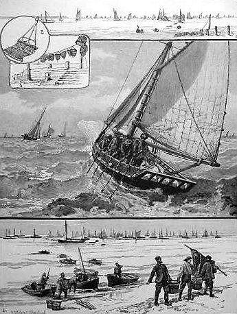 sw-Xylographie: Austernfischer, Segelboot