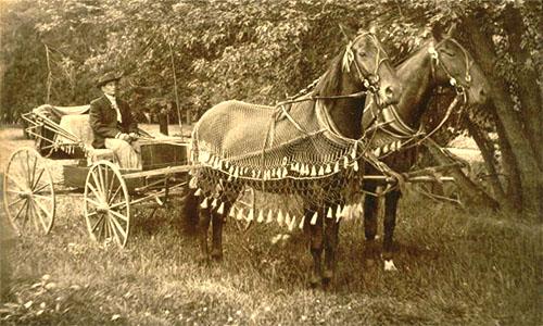 altes Foto: auf einer Wiese neben Bäumen stehende offene Kutsche nebst Kutscher, die zwei vorgespannten Pferde mit netzartigem Überwurf mit Fransen