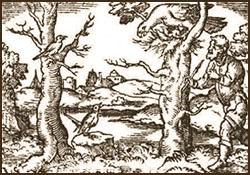 Holzstich: hinter Baum lauernder ein Vogelfänger mit Leimrute