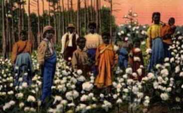 PK: Menschen stehen im Baumwollfeld