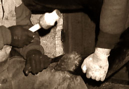 s/w Foto: Hufschmied und Assistent beim Kürzen des Hufes mit der Hauklinge