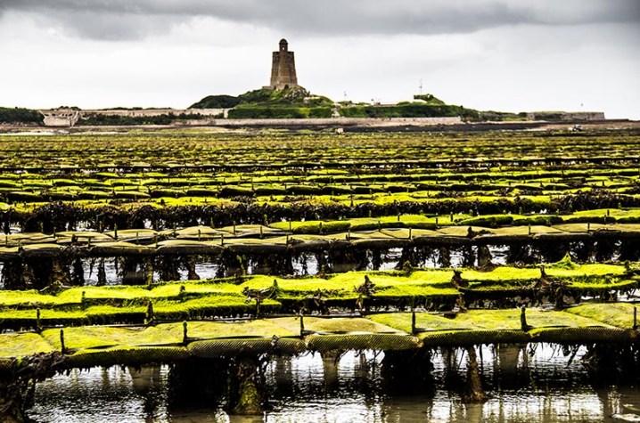 Farbfoto: Austernbänke, im Hintergrund Festung