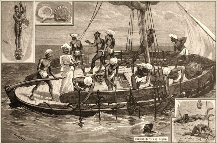 Perlenfischer, Perlentaucher, Perlen, Ceylon