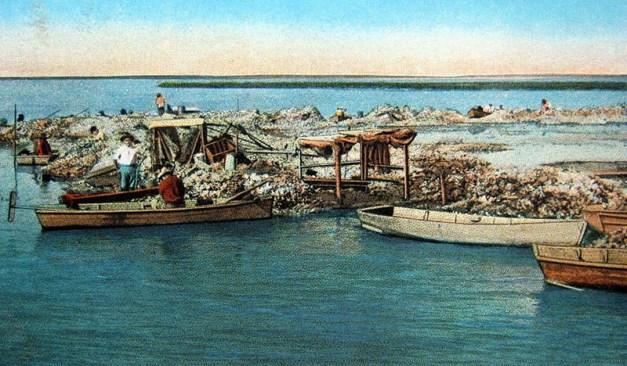 USA, Texas, Austernfischer, Austernzucht