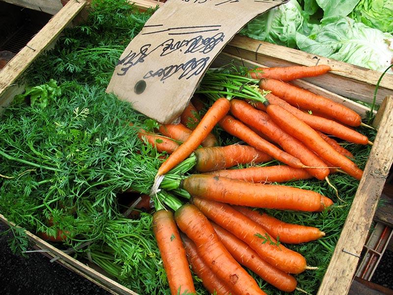 regennasses frisches Karottenbündel in einer Holzkiste