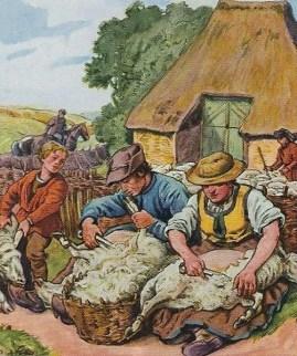 Sammelbild:Familie schert die Schafe