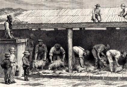 Schafschur, Schafe, Schäfer, Schafe scheren