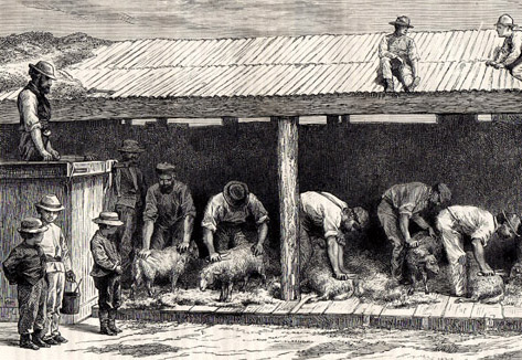 s/w-Zeichnung: mehrere Männer scheren unter einem Unterstand Schafe