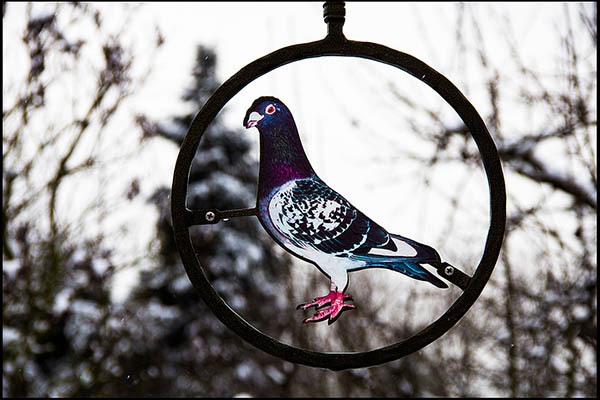 Foto: rundes Schild mit leuchtender Taube