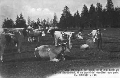 junger Kuhhirte auf der Wiese