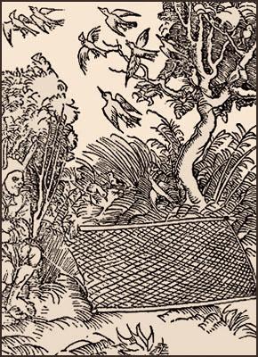 Holzschnitt: im Gebüsch versteckter Vogelsteller mit Klappnetz - 1498
