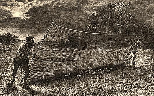 Zwei Männer kippen Wurfnetz an Stangen über Vögel am Boden