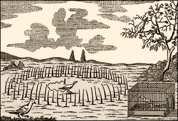 Holzstich: beleimte Ruten ragen kreisförmig aus dem Boden