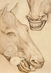 Zeichnung: Pferdekopf mit Trensenstange im Maul - 15. Jh