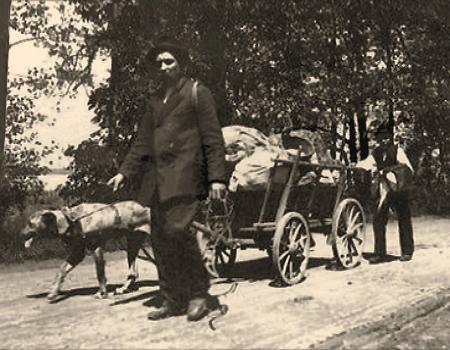 sw Foto: ein Mann zieht neben Hund Deichsel von Leiterwagen, zweiter Mann schiebt am Wagenende - 1910