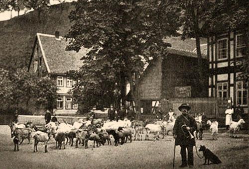 sw Foto: Hirte mit Horn u. Hund verlässt Dorf mit Ziegen
