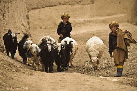 Farbfoto: zwei Jungen führen Ziegen über karges Land