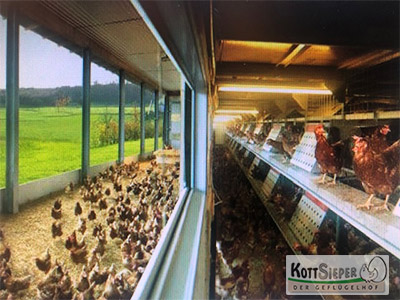 Farbfoto: Hühnerstall mit mit Auslaufbereich