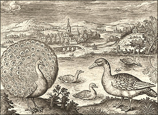 Kupferstich: Pfau, Enten und Gänse am Fluß ~1600