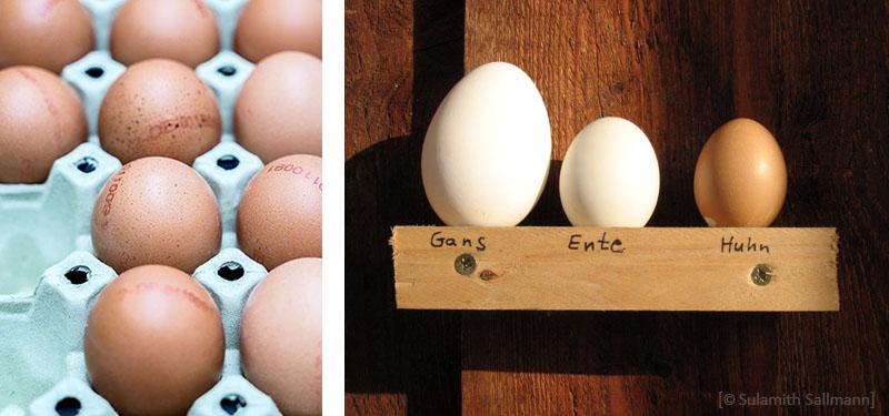 Farbfotos: Hühnereier auf Palette / Eier von Gans, Ente und Huhn
