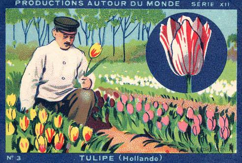 Sammelbild: Tulpengärtner