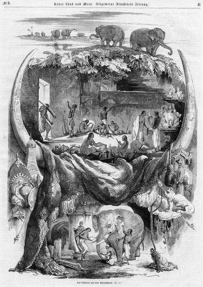 sw-Zeichnung: Elfenbeinherstellung von Stoßzähnen der Elefanten