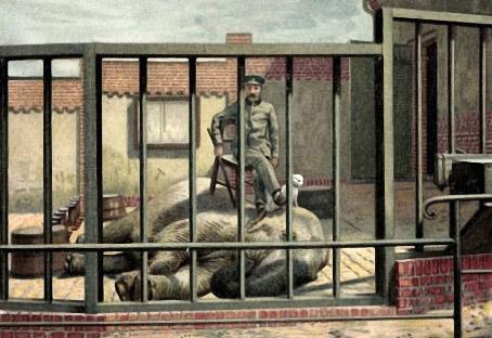 Tierpfleger hat es sich mit einem Stuhl auf einem liegenden Elefanten bequem gemacht