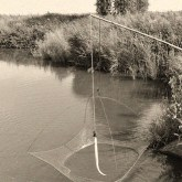 sw Foto: gepödderter Aal wird in Fischsenke verbacht