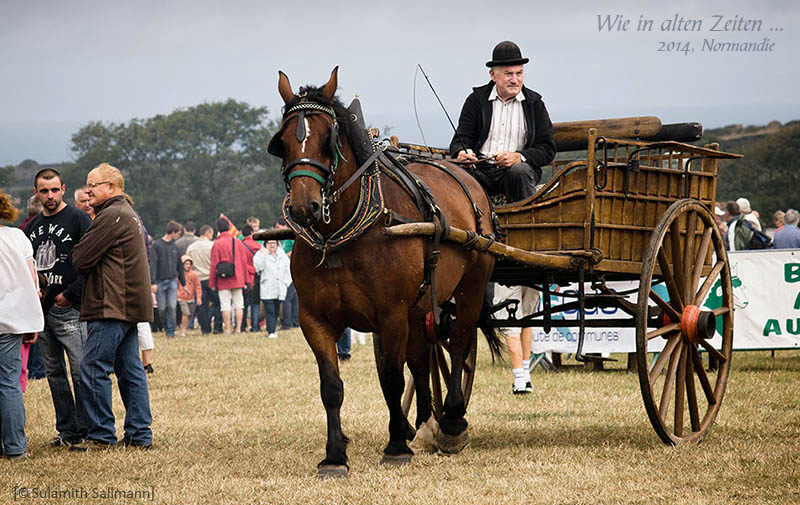 Farbfoto: Kutscher mit historischer Einspänner-Zweiradkutsche - 2014, FR
