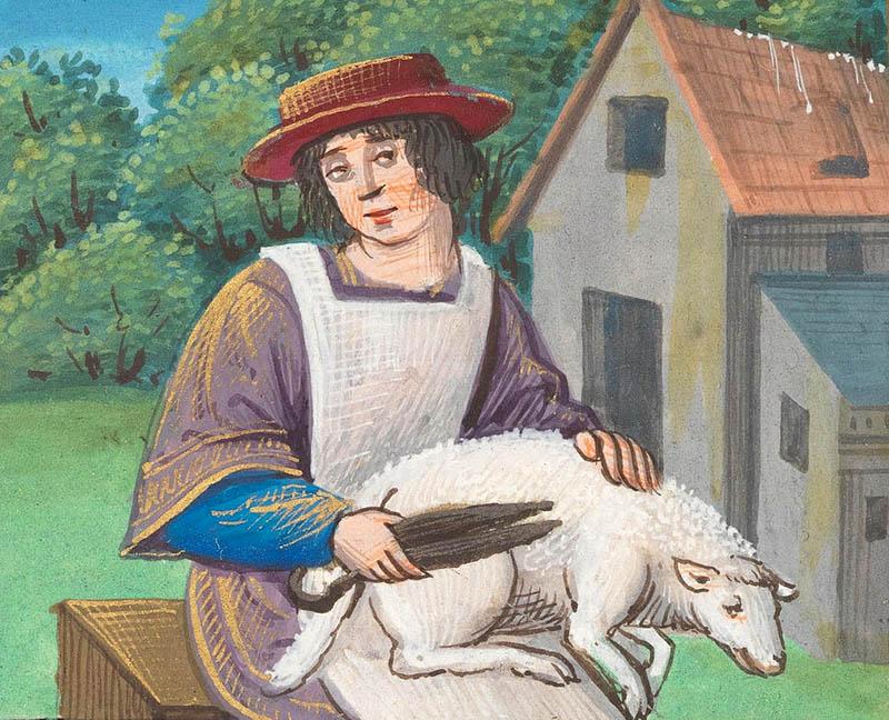 Mann hat Schaf auf seinem Schoß und schert es