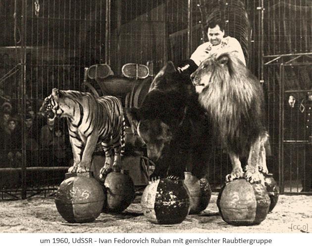 sw Foto: Dompteur Ruban mit gemischter Raubtiergruppe ~1960, UdSSR