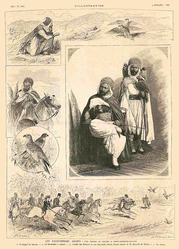 Falkner in verschiedenen Zeichnungen