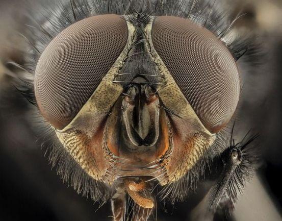 deadliest animals on earth tsetse fly