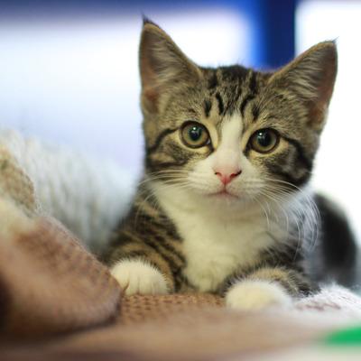 قطط – صور قطط – قطه