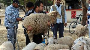 A Tunisian man carries a sheep at Ariana animals market in Tunis on November 5, 2011, ahead of the traditional sheep slauhter to mark the Muslim holiday of Eid al-Adha, or Feast of Sacrifice. Muslims slaughter sheep, goats and cattle during the eid, which marks the end of the annual hajj pilgrimage to the Muslim holy city of Mecca and is celebrated in commemoration of prophet Abraham's readiness to sacrifice his son Ismail to show obedience to God. AFP PHOTO / FETHI BELAID (Photo credit should read FETHI BELAID/AFP/Getty Images)