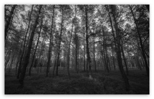 forest_black_and_white-t2