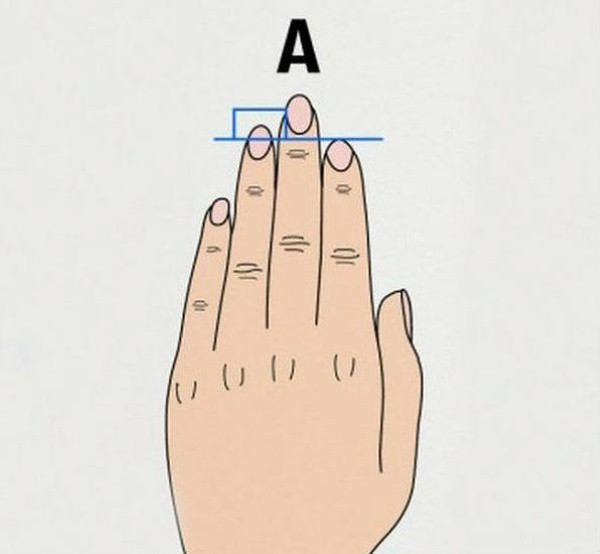 طول أصابع