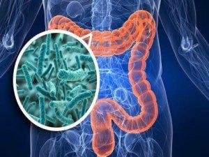 Antibiyotiklerin Bağırsak Mikrobiyotasına Etkisi