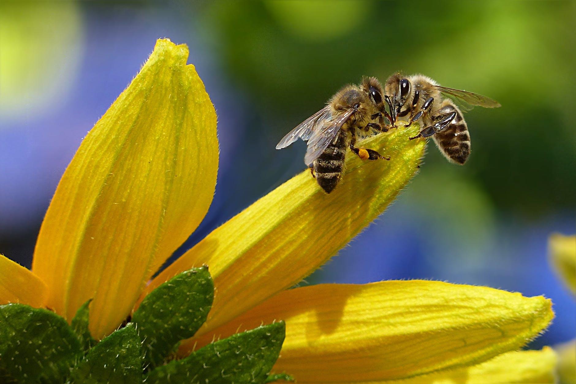 Arı Poleninin Faydaları Yan Etkileri Zararları